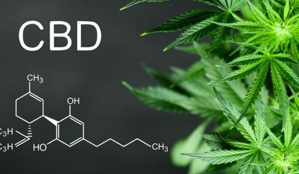 How to choose CBD oil?