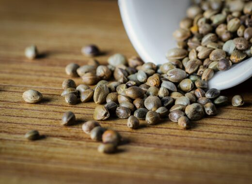 hemp-seeds-cannabis-seeds